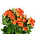 白い背景で隔離のバラの花束. — Stock fotografie