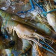 Fresh crawfishes — Stock Photo #45597065