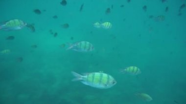 Group of coral fish in Andaman Sea near Krabi, Thailand — Stock Video