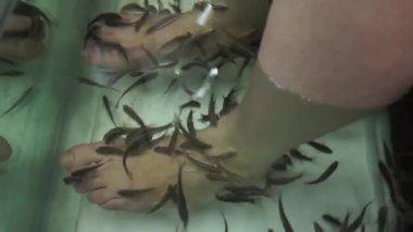 Fish massage in Thailand — Stock Video
