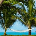 Hammock between palm trees — Stock Photo #45922297