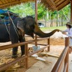 Young woman feeding elephant — Stock Photo