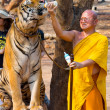 ������, ������: Tiger Temple Thailand