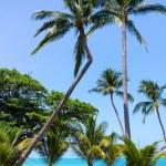 Hammock between palm trees — Stock Photo #46131587