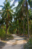 Road in palm forest i — Stock Photo