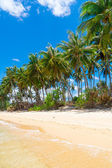 Untouched tropical beach — Stock Photo