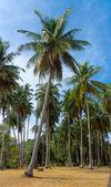 Beautiful palm forest — Stock Photo