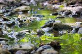Mountain forest stream — Stock Photo