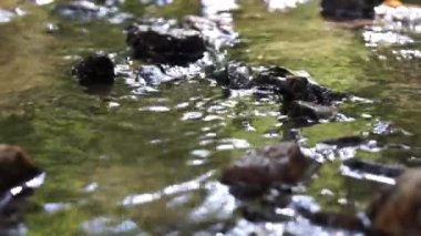 Water flowing in a forest creek — Stock Video