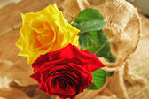 A pair of roses — Stock Photo