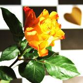 Rose - Still Life — Stock Photo