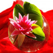 Red water lily — Stock Photo