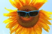 Sunflower with sunglasses — Stock Photo
