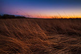 Prairie at Dusk — Stock Photo