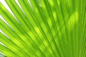 Abstract green leaves background — Stock Photo