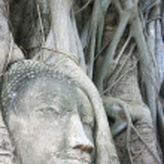 Wat Mahathat Buddha Head — Stock Photo #7966798