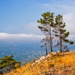 Stock Photo: Pines on mountain