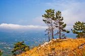 Pines on mountain — Stock Photo
