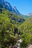 Mountain forest — Stock Photo