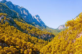 Mountain forest — Foto Stock