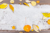Leaves on snow — Stock Photo