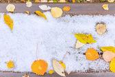 Feuilles sur la neige — Photo