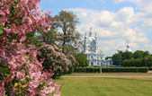 Smolny Cathedral St. Petersburg — Stock Photo