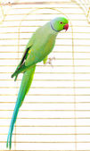 Big green parrot — Stock Photo