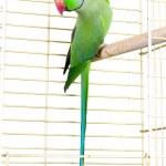Parrot — Stock Photo #38657925