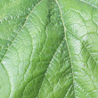 Green leaf — Stock Photo #40390837
