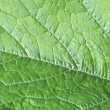 Green leaf — Stock Photo #40390839