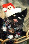 Christmas cat closeup — Stock Photo