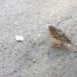 Stock Photo: Sparrow and crumb