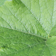 Green leaf — Stock Photo #43593481