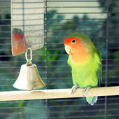 Papagaio — Foto Stock