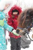 Häst utfodring — Stockfoto