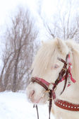 Winter horse — Foto Stock