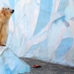 White bear — Stock Photo #49577303