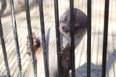 Söt otter — Stockfoto