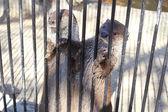 Cute otters — Stockfoto