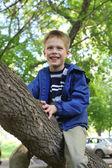 Little boy climbing trees — Stock Photo