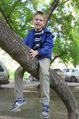 Liten pojke klättra i träd — Stockfoto