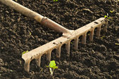 Tillage rake for planting crops. — Stock Photo