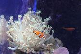 Water world aquarium — Stok fotoğraf