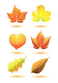 Fall leaves — Stock Vector