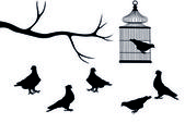 Birds and cage — Stock Photo