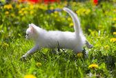 Adorable grey kitten — Stock Photo