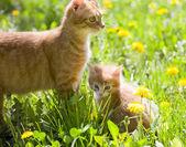 Little tabby kitten with mother cat — Stock Photo