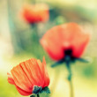 Poppy. — Stock Photo #15652025
