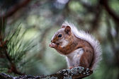 Cute squirrel eating — Stockfoto